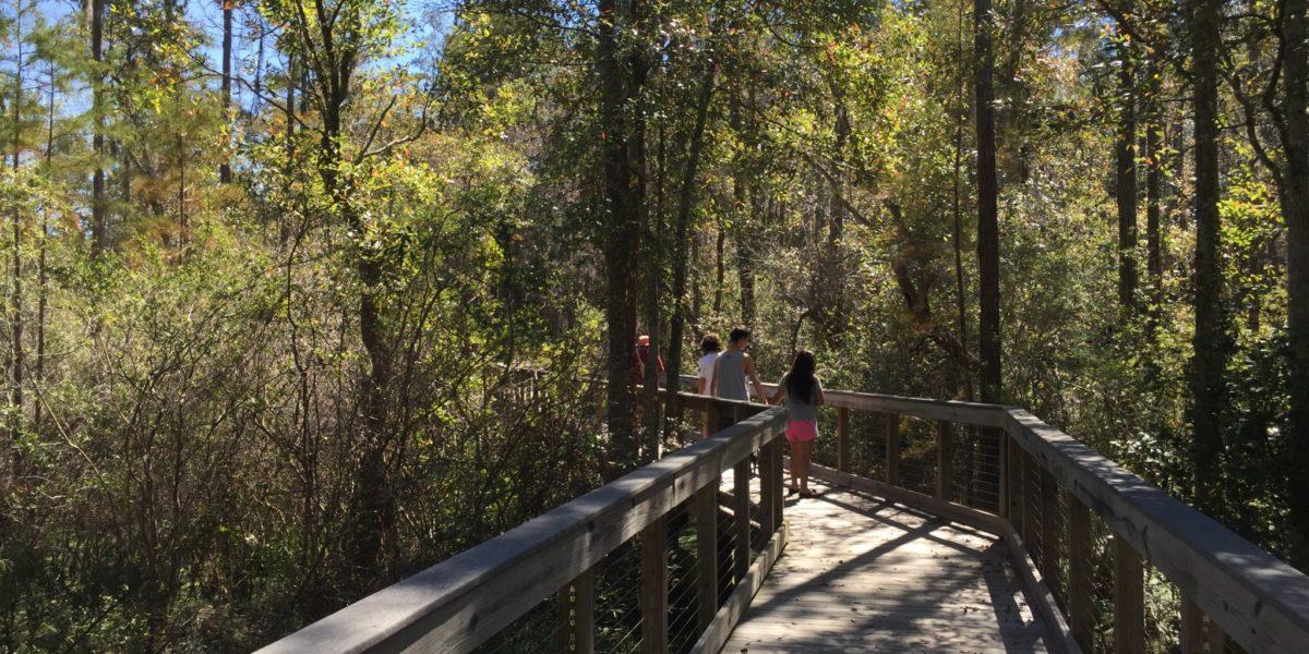 Boardwalk hike at Conservation Park