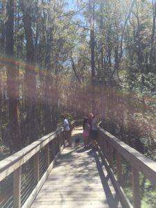 Boardwalk section of Cypress Pond Trail