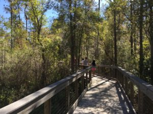 Boardwalk hike at Conservation Park