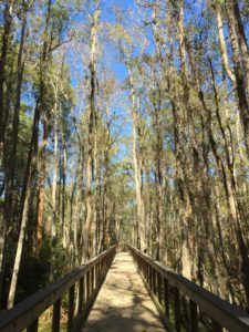 Boardwalk on Cypress Pond Trail