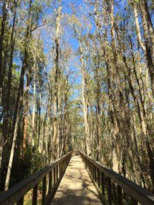 Boardwalk on Cypress Pond Trail