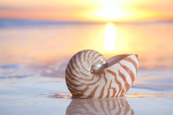 Shell Island Panama City Beach width=
